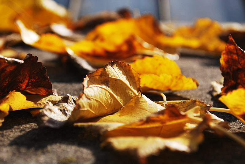 leaf-blur-leaves-ground